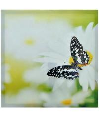 Obraz plátno 50 x 50 cm, kód  34508
