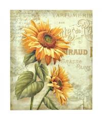 Obraz plátno 35 x 45 cm, kód  35285
