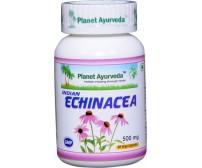 Indická Echinacea Kapsule (Právenka latnatá)